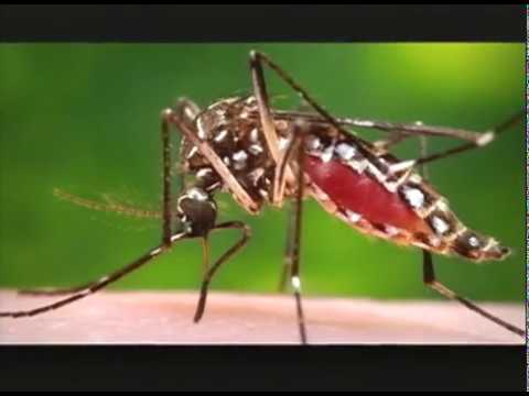 MOH Unable to Confirm Dengue in Many Instances (TVJ Prime Time News) -Sept 1 2018