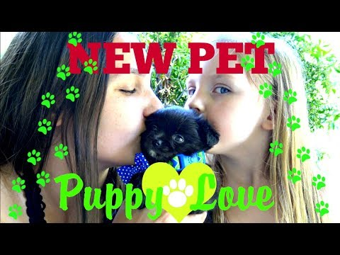 Kaia And Sissy Get A New Puppy The Toytastic Sisters