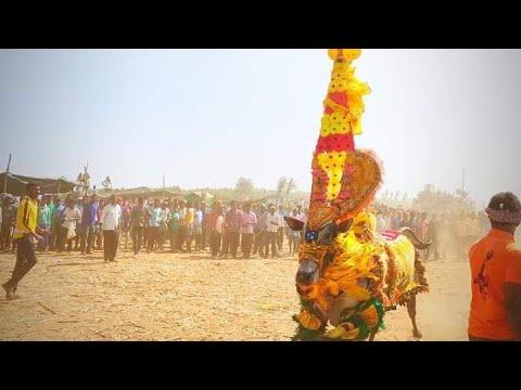#LaxmipuraHorihabba_Hori Habba_ಲಕ್ಷ್ಮೀಪುರ ಹೋರಿ ಹಬ್ಬ_ಹೋರಿ ಹಬ್ಬ_Lakshmipura Hori Habba  2020...