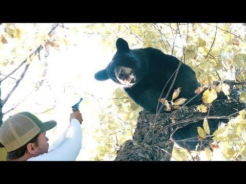 BIG BEAR SHOT WITH PISTOL - The Untamed