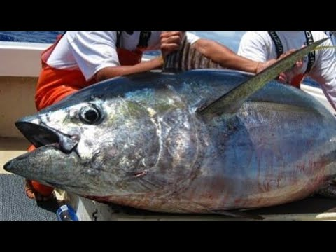 Ahi fishing Hawaii 2015