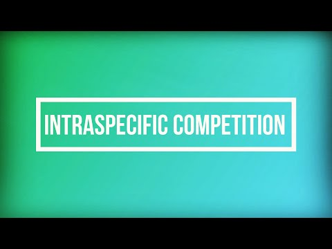 Documentary On Intraspecific Competition (2MBIO7: Fungo & Lee)