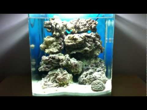 MY FISH TANKS - AFRICAN CICHLIDS - TROPICAL AND MARINE