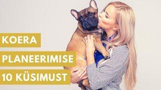 Lemmikute Lemmik 1. osa. Millele mõelda, enne kui võtad koera?