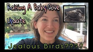 Raising a Baby Dove Update: Jealous Bird Parents??? | Kelsey_tube