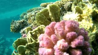 Подводная съемка кораллового рифа. Красное море. Египет.