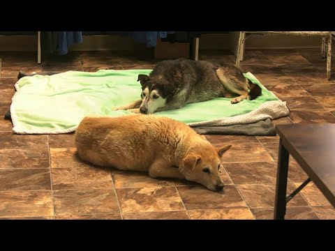 2 old dogs that spent 14 years in the Alta. wild rescued