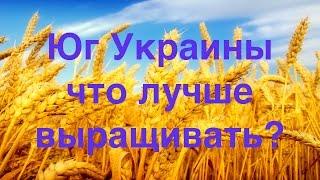 Агрохимсервис. Зерновые для юга Украины
