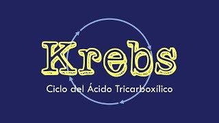Memoriza rápidamente el ciclo de Krebs completo!!