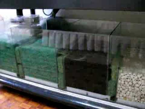Moving Bed Sump Filtration 280 Gallons Tank Youtube