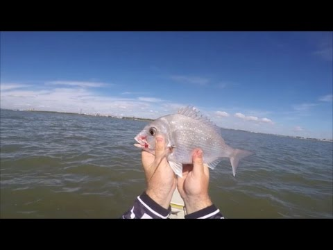 Port of Brisbane Snapper Ep 06