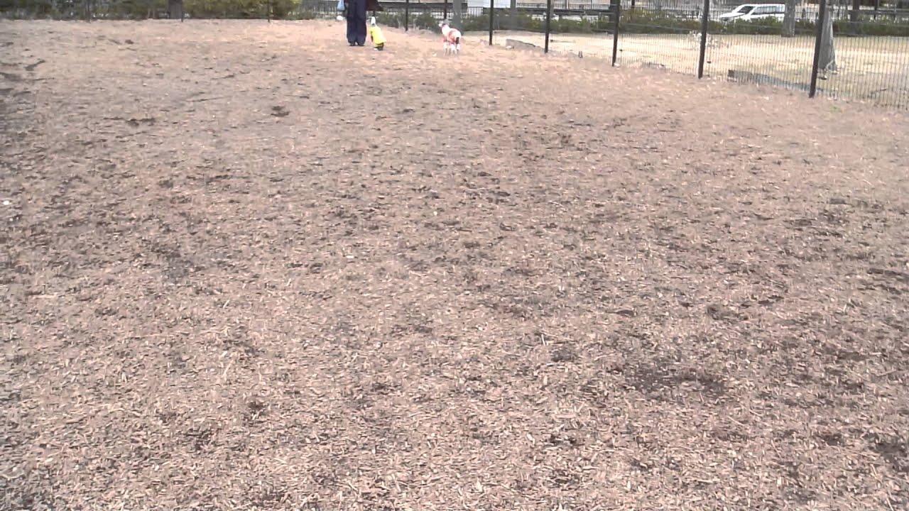 ドッグラン 舎人 公園