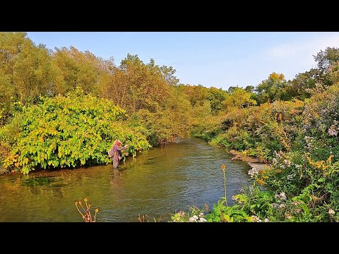 Fly Fishing The Driftless Region For Wild Brown Trout