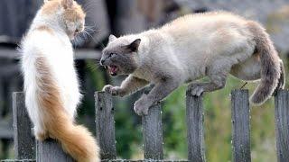 Видео про кошек онлайн бесплатно - Драка котов