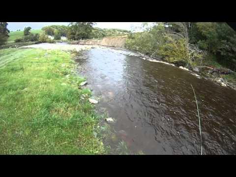 River Elwy Fly Fishing