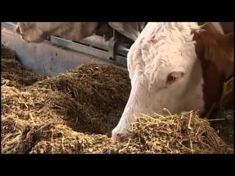 Landwirtschaft in Bayern: Landkreis Landshut in Niederbayern