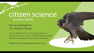 Feb 11, 2021 Spotlight On...Birds at the Field Museum and Peregrine Falcons