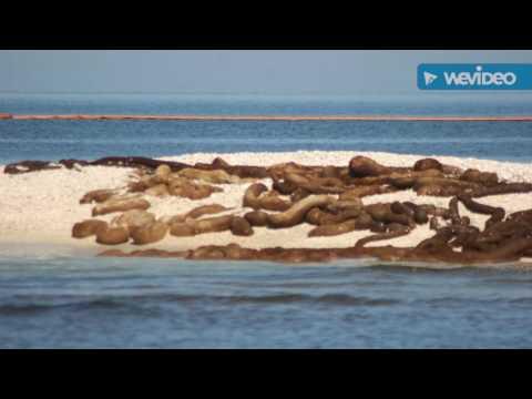 BP Oil Spill Environmental Video