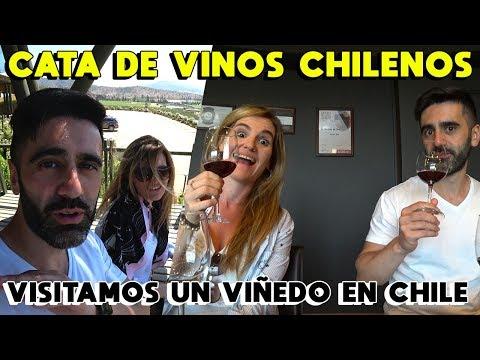 COMO ES UNA VIÑA EN CHILE: CÓMO SE HACE EL VINO 🍷 CATA DE VINOS EN VIÑEDO CHILENO
