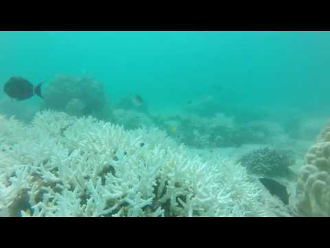 Seychelles Freediving - Underwater Landscape