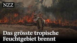 Das grösste tropische Feuchtgebiet brennt – was bedeutet das für unsere Umwelt?