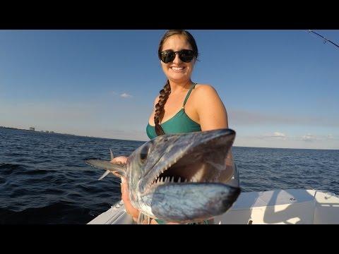 Shark Caught Off Navarre Beach
