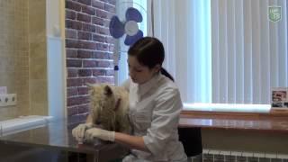 Использование Гамавита при лечении собак от пироплазмоза. Клинический случай.