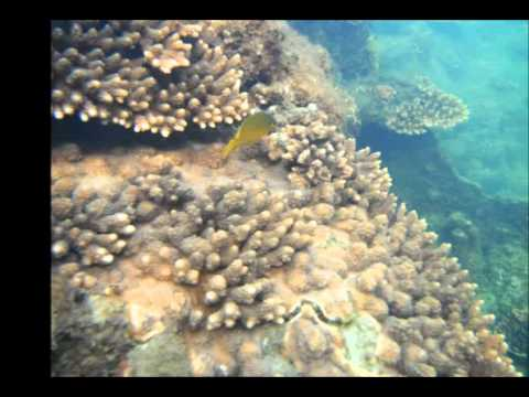 Bucket List Brisbane Moreton Island Snorkling