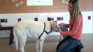Humane Society Of Boulder Valley Trainer's Tip: No-pull Harnesses