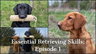 Labrador Retriever | Essential Training Skills Episode 1