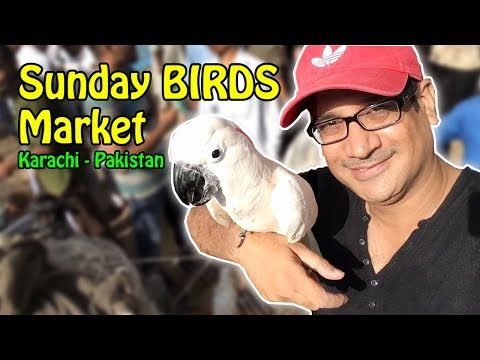 Sunday BIRDS Market Karachi | Lalukhet Birds for Sale in Pakistan | Video in URDU/Hindi
