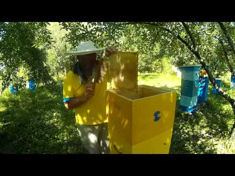 сколько можно заработать на пчеловодстве