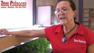 Der andere Tipp gegen Algen im Aquarium - Zoo Petersen informiert