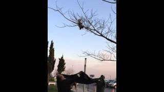 funny cat rescue from tree most seen