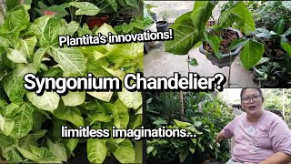 Syngonium Chandelier By Lola Malyn