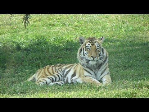 Safari In Va >> Virginia Safari Park National Bridge Drive Thru Zoo Youtube