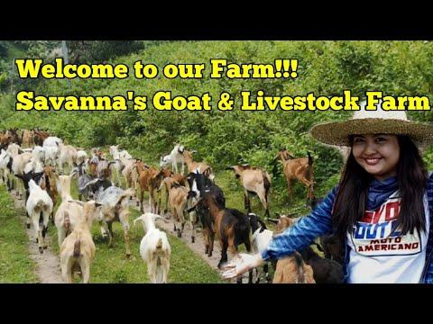 Welcome to Our Farm!!! Savanna's Livestock Farm
