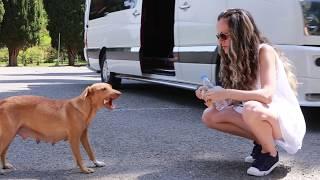 Street dogs, in Georgia