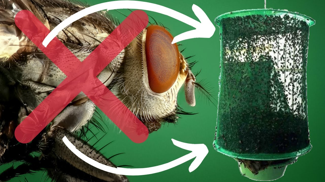 Best Reusable House Fly Trap Net | No Need For Homemade Fly Traps With This  Awesome Fly Catcher