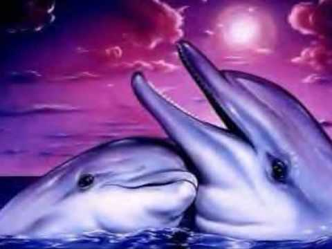Images dauphins youtube - Images dauphins a imprimer ...