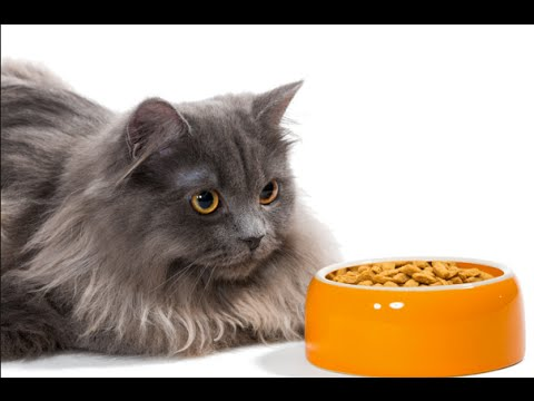 Best homemade food for persian cats