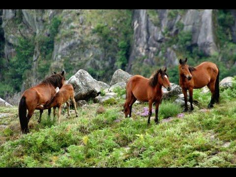 PORTUGAL   Parque Nacional da Peneda Gerês  National Park