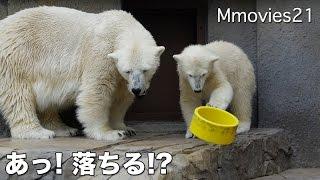 Polar Bears in trouble まさかそこに!? 困った親子は・・