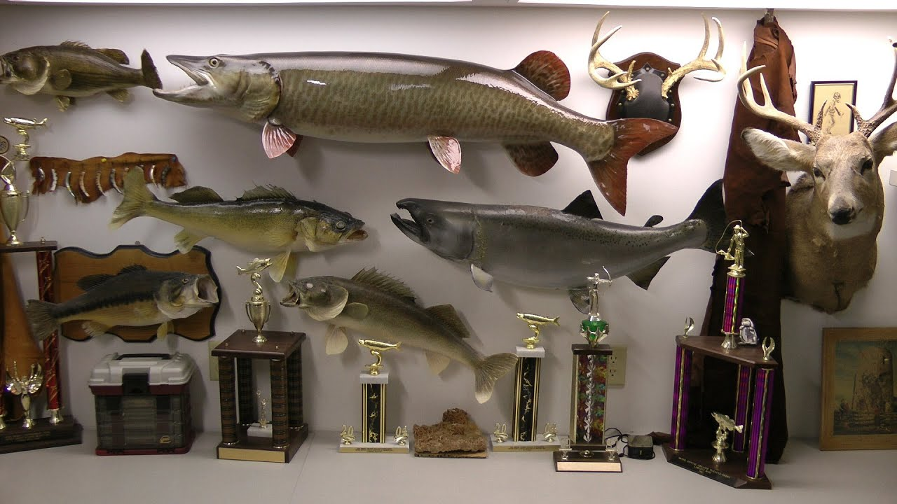 Best man cave fish and deer free fishing video on species for Fishing man cave