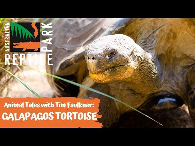 ANIMAL TALES WITH TIM FAULKNER | EPISODE 14 | GALAPAGOS TORTOISE