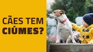 Os cães tem CIÚMES?