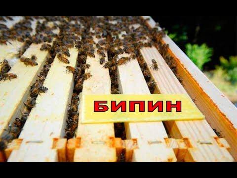 Обязательная обработка пчел бипином против варроатоза, после профилактической обработки полосками