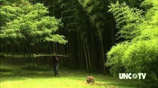 Haiku Bamboo Nursery