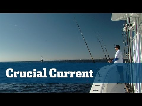Understanding Current On The Edge And The Role It Plays In Successful Fishing