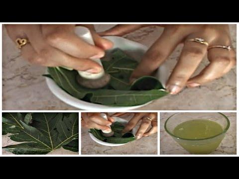 obat-nyeri-haid:-cara-membuat-ramuan-obat-herbal-daun-pepaya-untuk-mengatasi-nyeri-haid